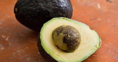 avocado acquire essay